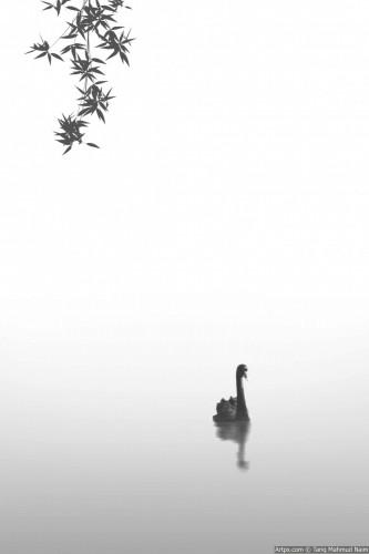 Beauty-of-Water.jpg