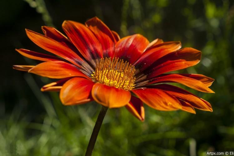 Flower_02_1.jpg